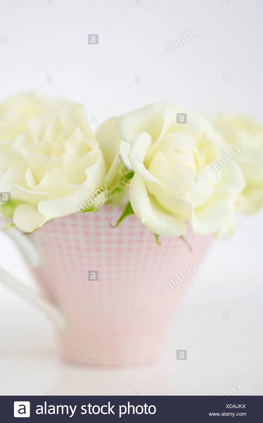 Florero con rosas blancas sobre fondo blanco, cerrar Imagen De Stock