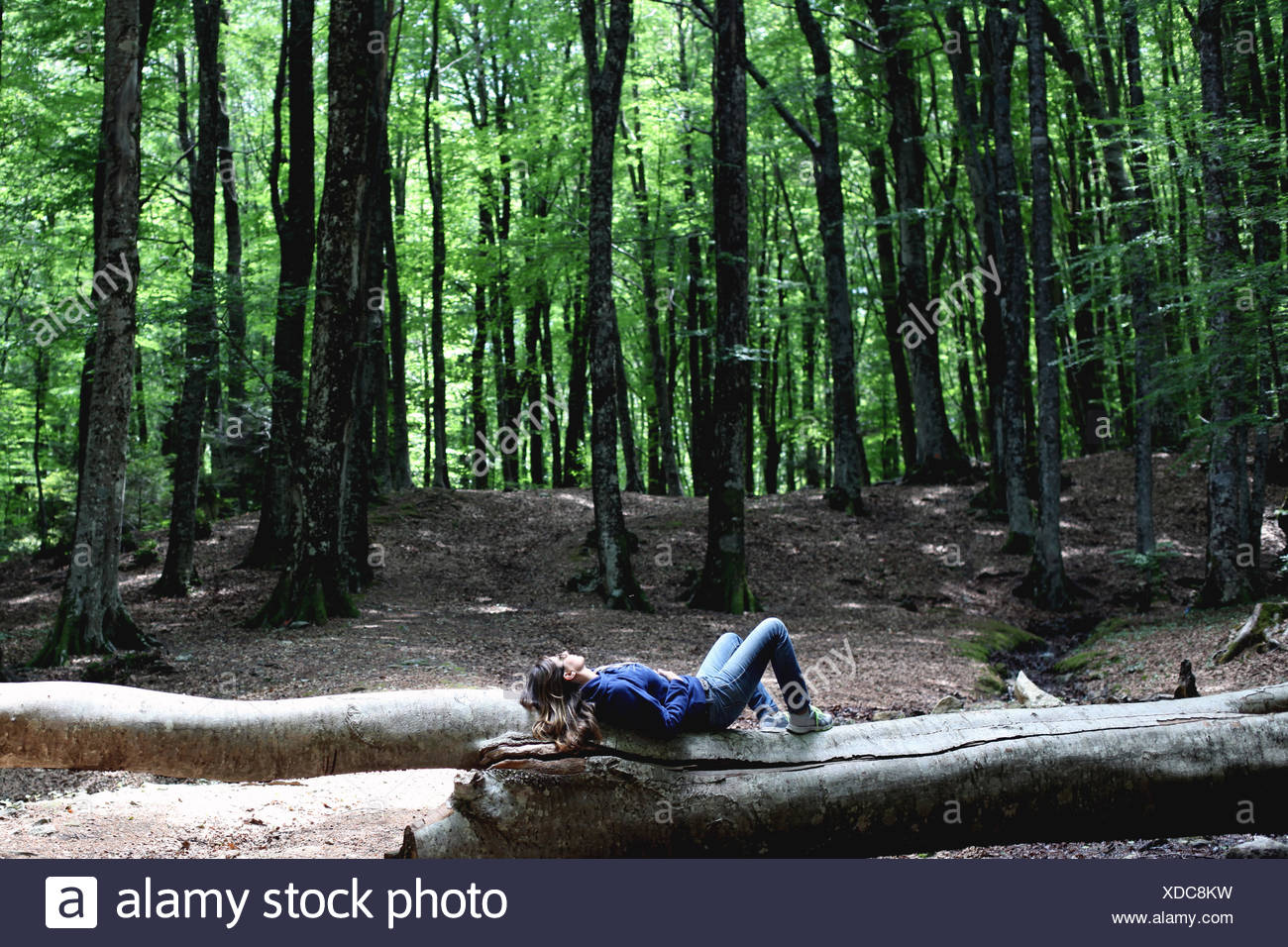Mujer acostada en log en el bosque Imagen De Stock