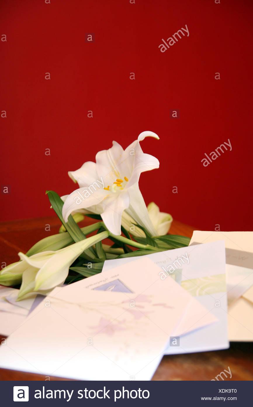 Lirios blancos y con simpatía las tarjetas de felicitación Imagen De Stock