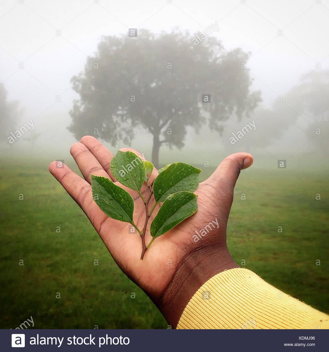 Mano humana sosteniendo la planta con el árbol en el fondo, Gauteng, Johannesburgo, Sudáfrica Foto de stock