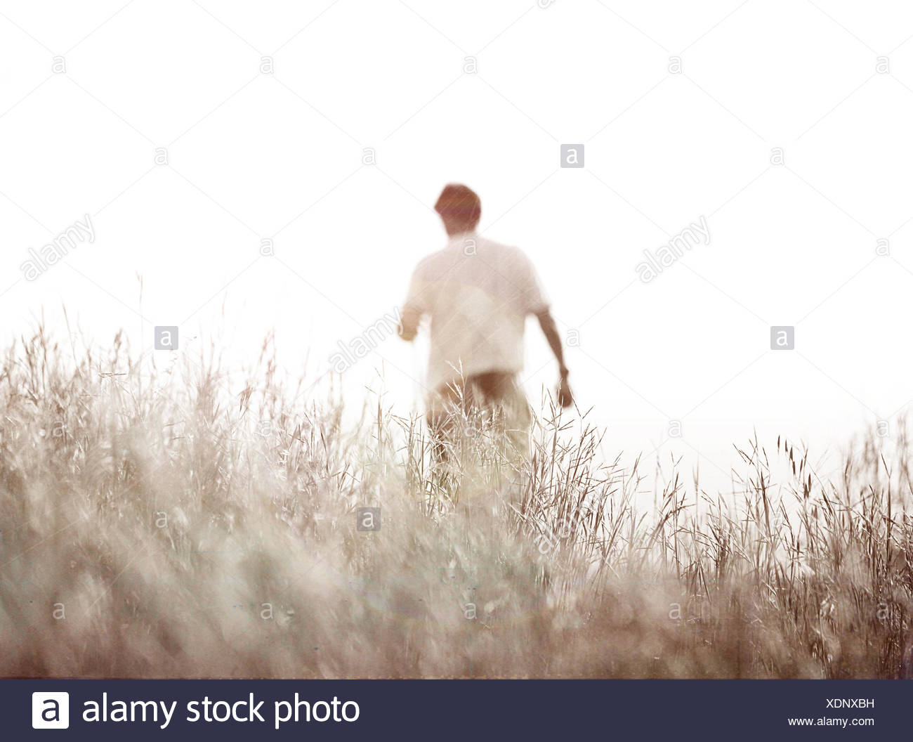 Vista trasera de un hombre en un campo Imagen De Stock