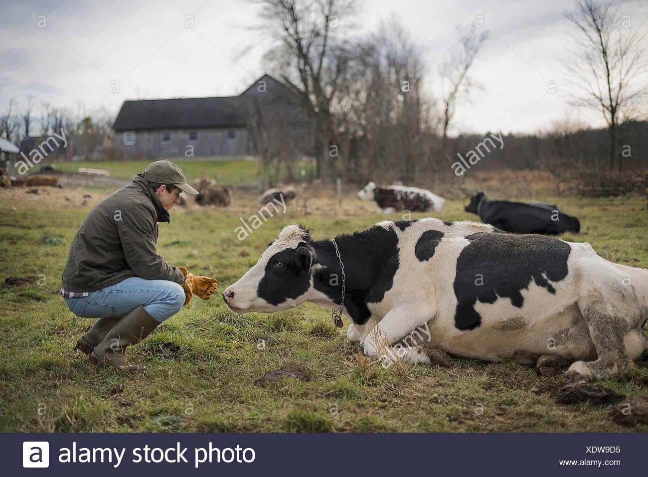 Granja de productos lácteos Imagen De Stock