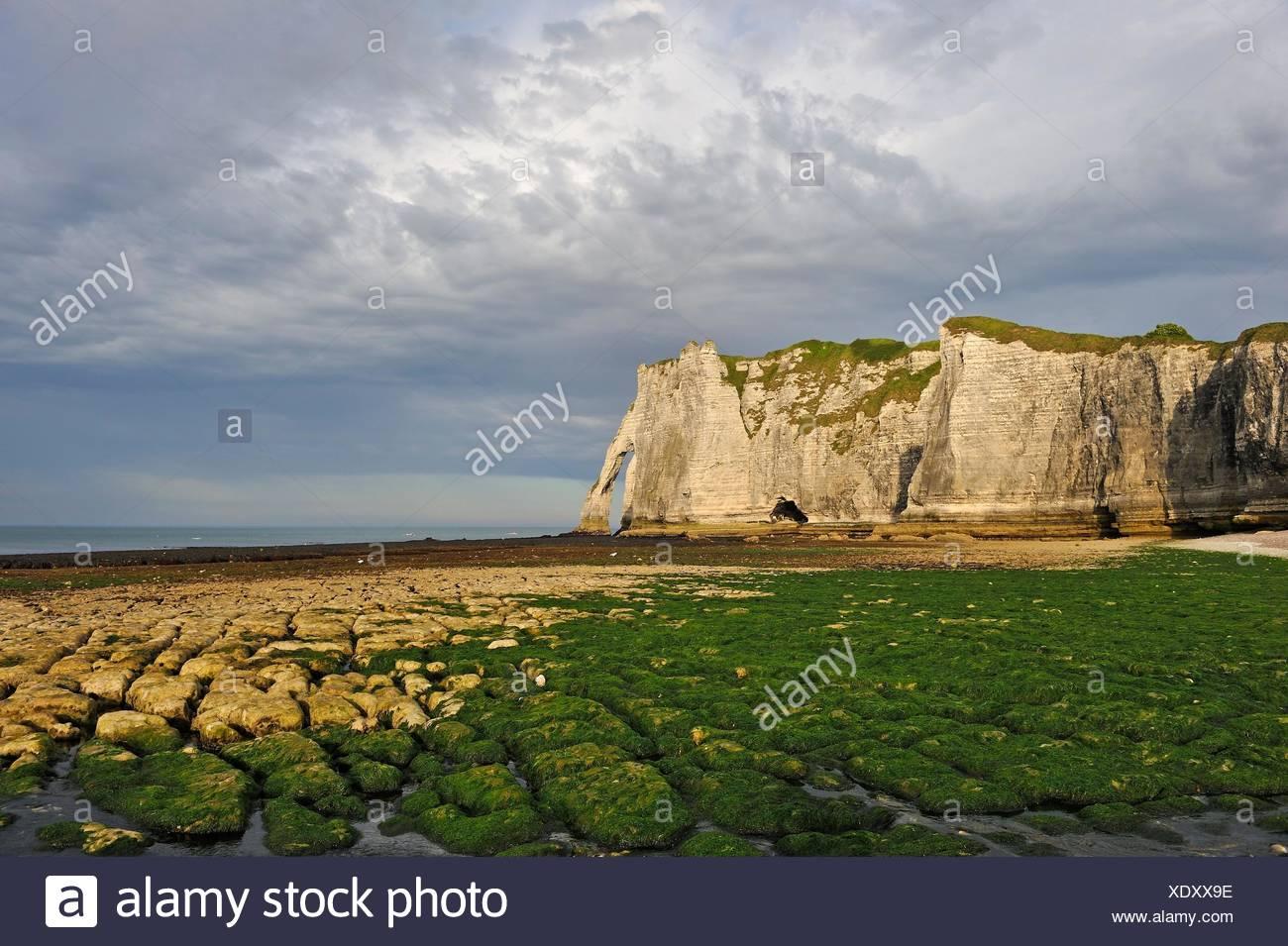 El embalse en la marea baja y cliff, Etretat Seine-Maritime, departamento, región de Normandía, Francia, Europa. Foto de stock