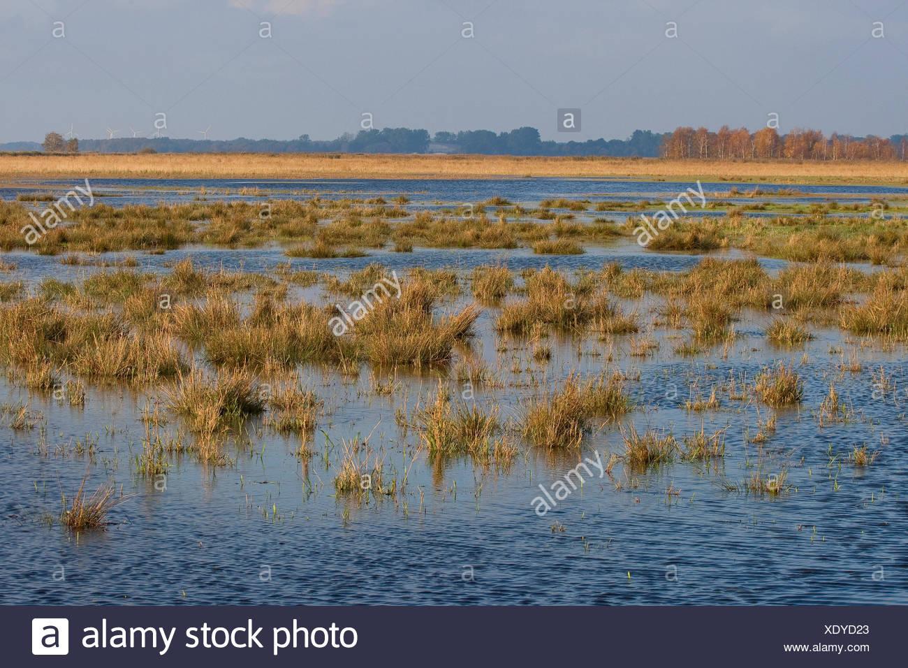 Marsh pradera bajo el agua, Alemania Imagen De Stock