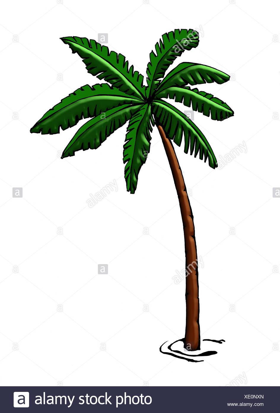 Ilustración Gráfica De Palm Dibujo Acuarela árbol Tropical De