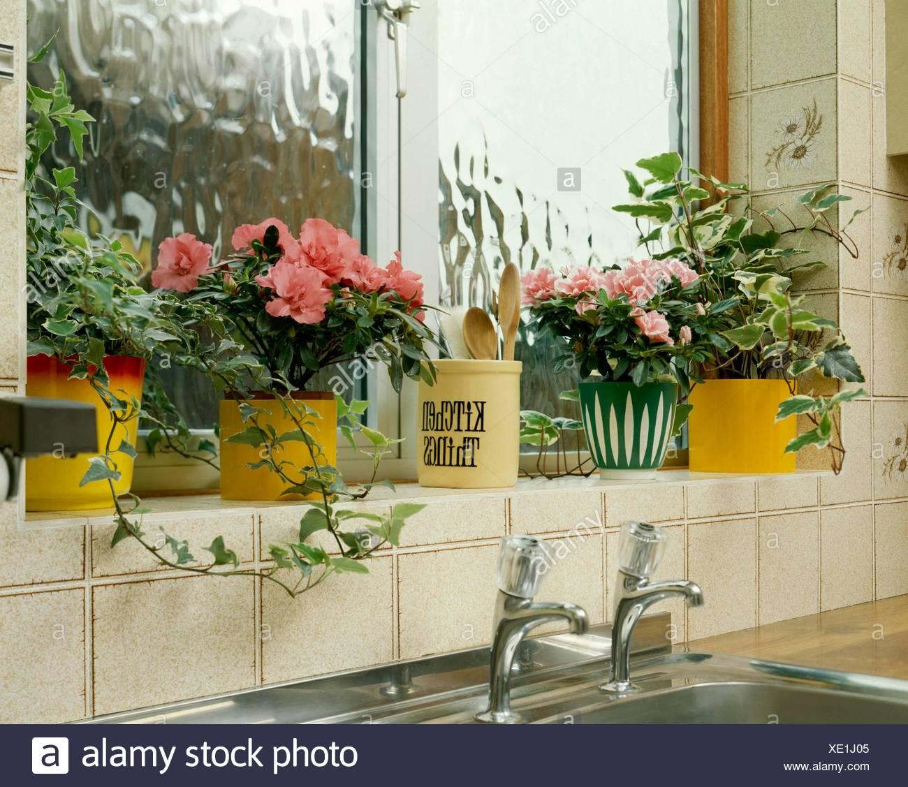 hiedra interior Plantas De Interior In Situ Cocina Hedera Hiedra Y