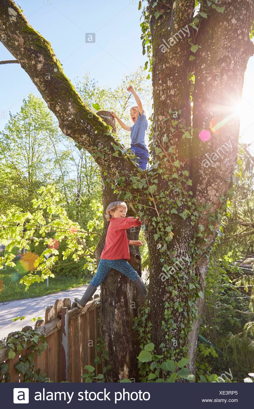 Dos jóvenes de árbol de escalada Imagen De Stock