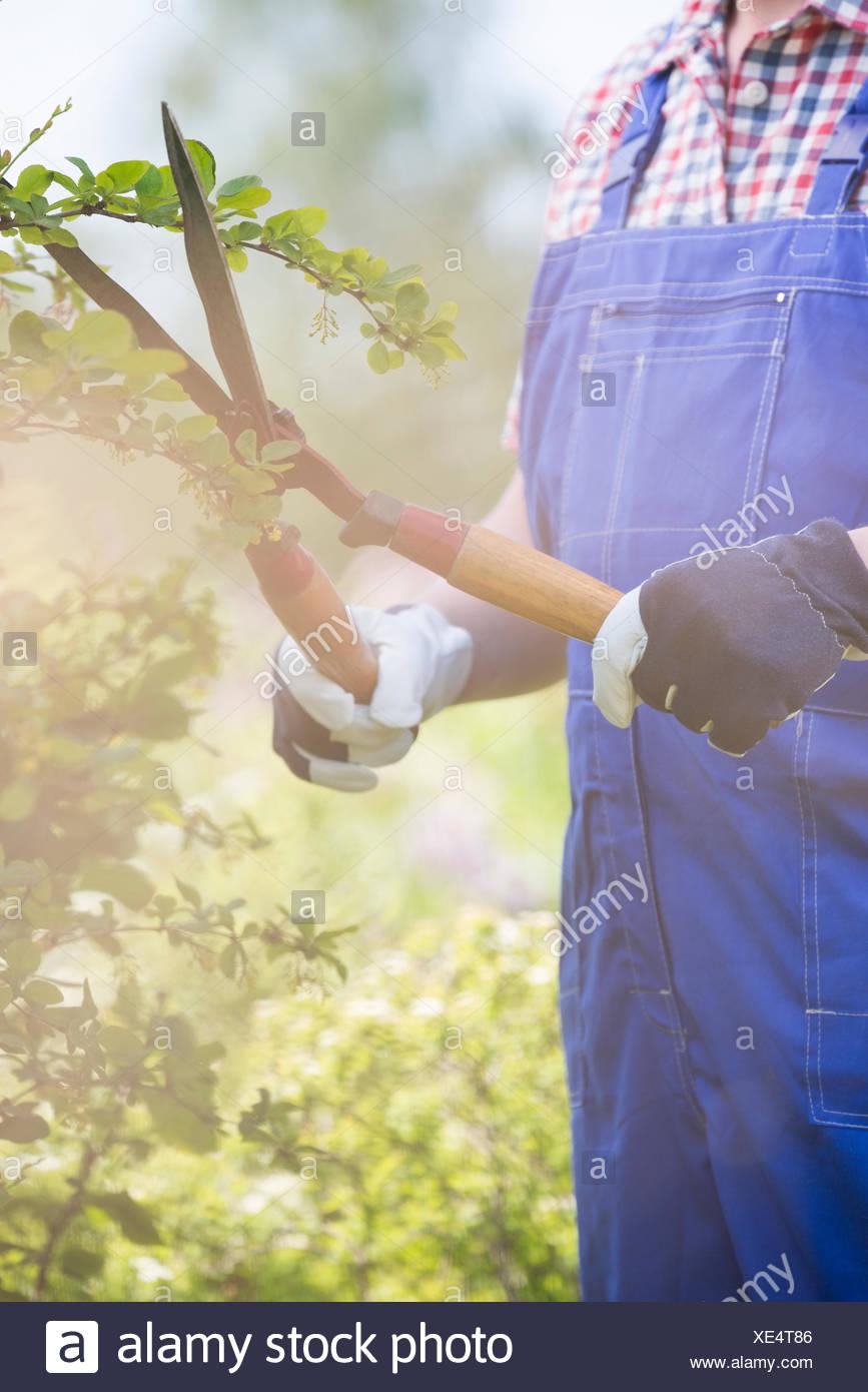 Parte media de jardinero ramas de fresado en el vivero de plantas Imagen De Stock