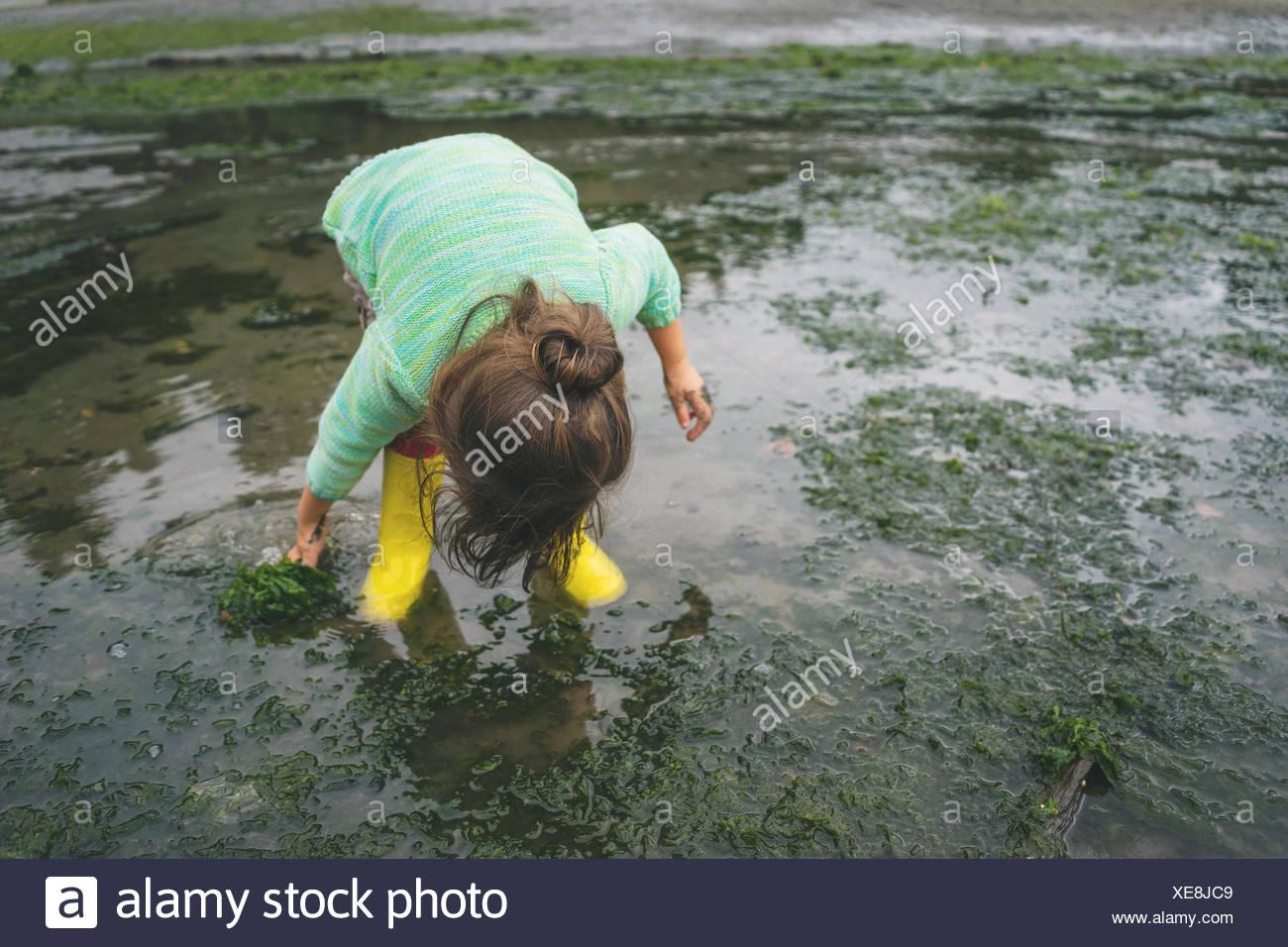 Chica recogiendo las algas en aguas superficiales Foto de stock