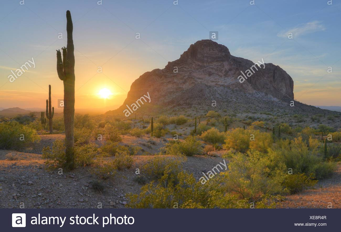 Ee.Uu., Arizona, Eagletail montañas Desierto, desierto amanecer en primavera Foto de stock