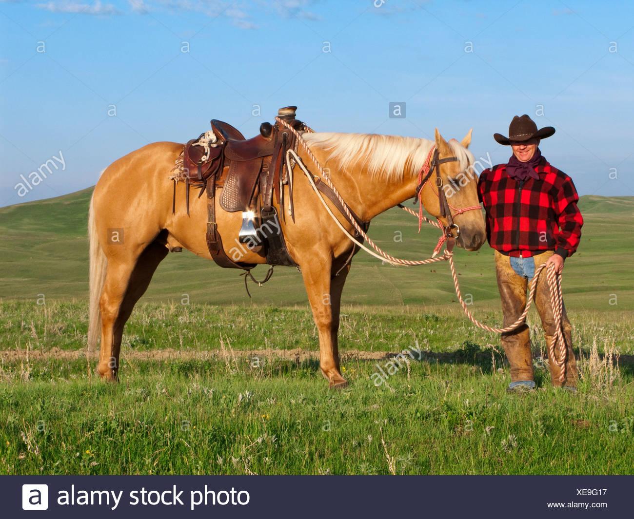 Ganadería - un vaquero posa con su caballo en una pradera verde / de Alberta, Canadá. Foto de stock
