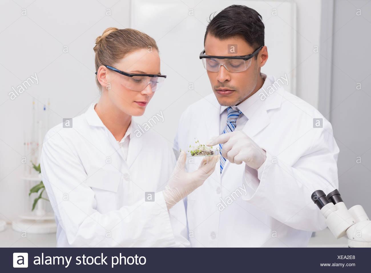Los científicos sosteniendo una placa de Petri con pruebas de plantas Foto de stock
