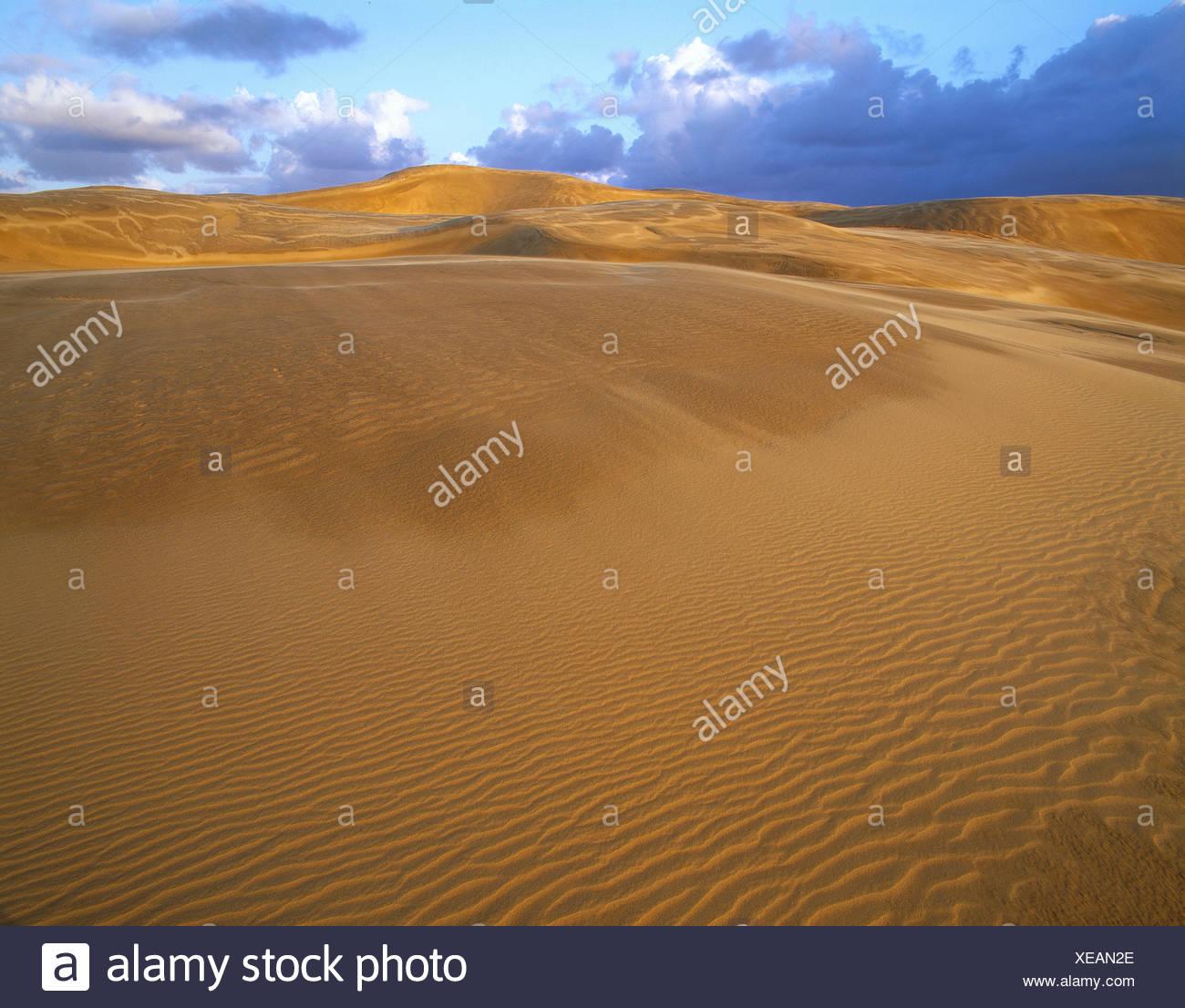 Nueva Zelanda. El norte de la isla. La playa de las 90 millas. Imagen De Stock