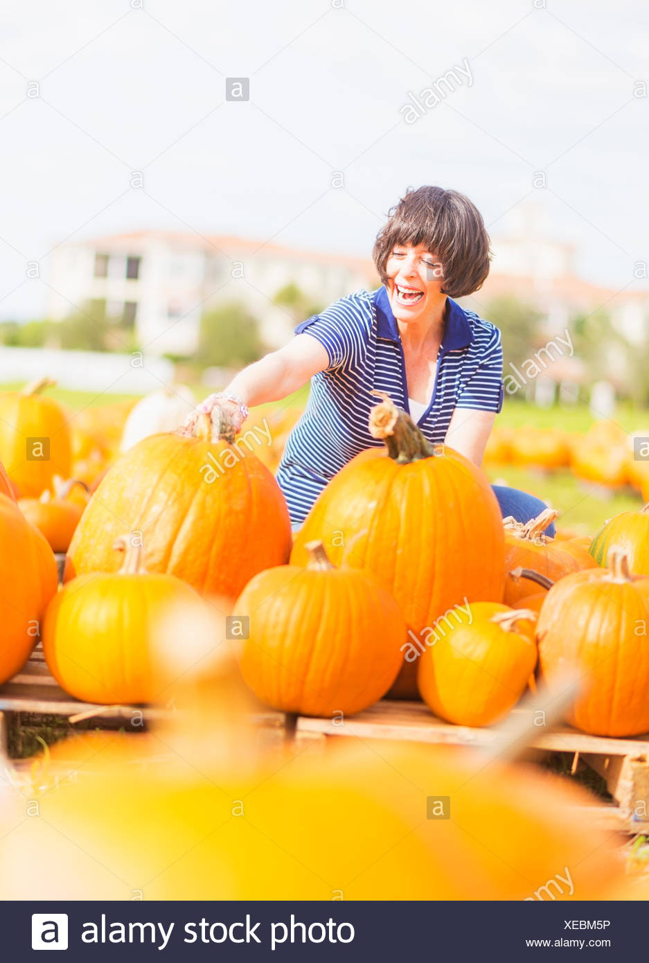 Ee.Uu., Florida, Júpiter, mujer madura, recogiendo calabazas Imagen De Stock