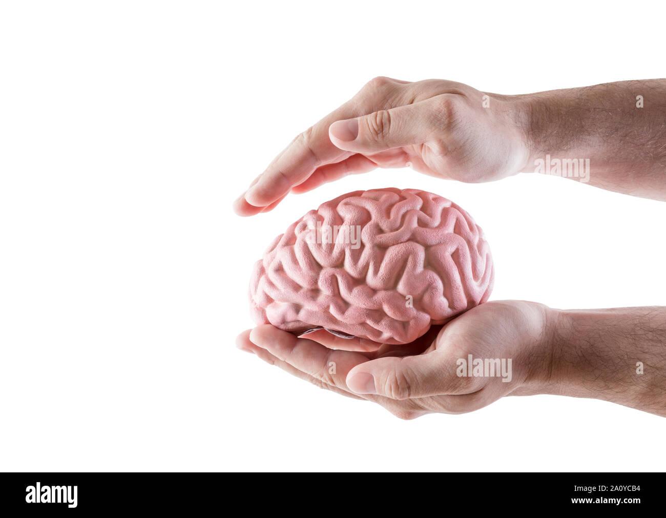 Cerveau humain couverts par des mains isolé sur fond blanc Banque D'Images