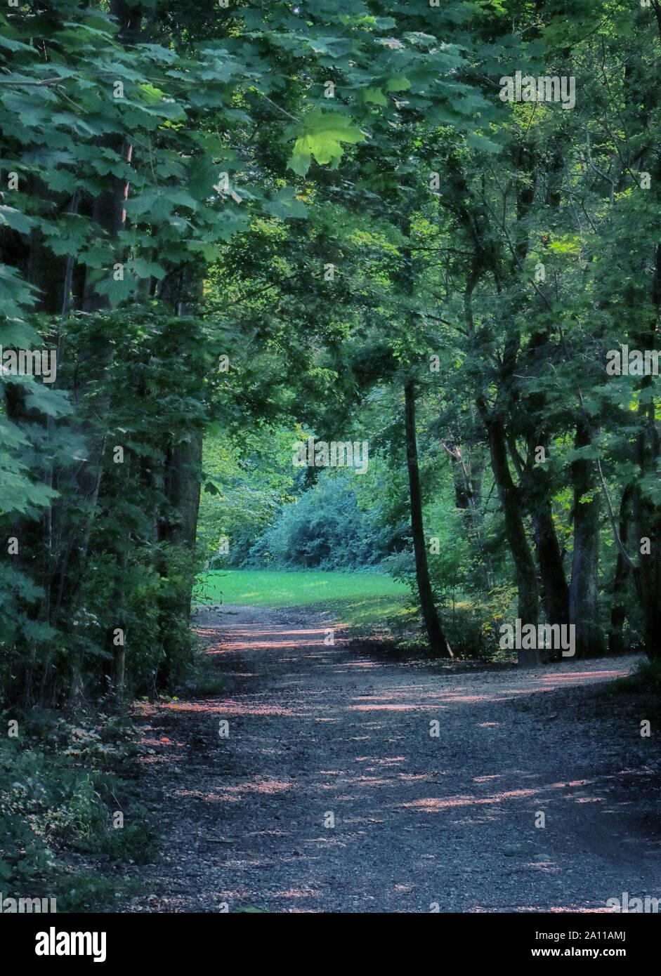 Beau chemin dans l'ombre verte entourée d'arbres avec une végétation luxuriante en été, le paysage en jardin anglais à Munich Banque D'Images