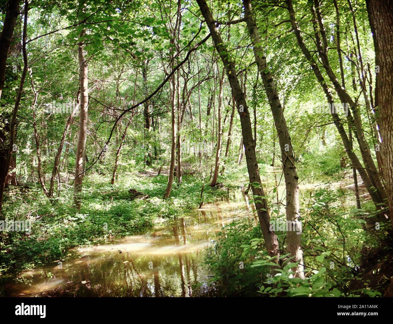 La végétation dense et luxuriante de l'été l'encadrement des eaux d'un petit canal à l'Englischer Garten à Munich, le paysage en contre-jour avec le soleil reflet o Banque D'Images