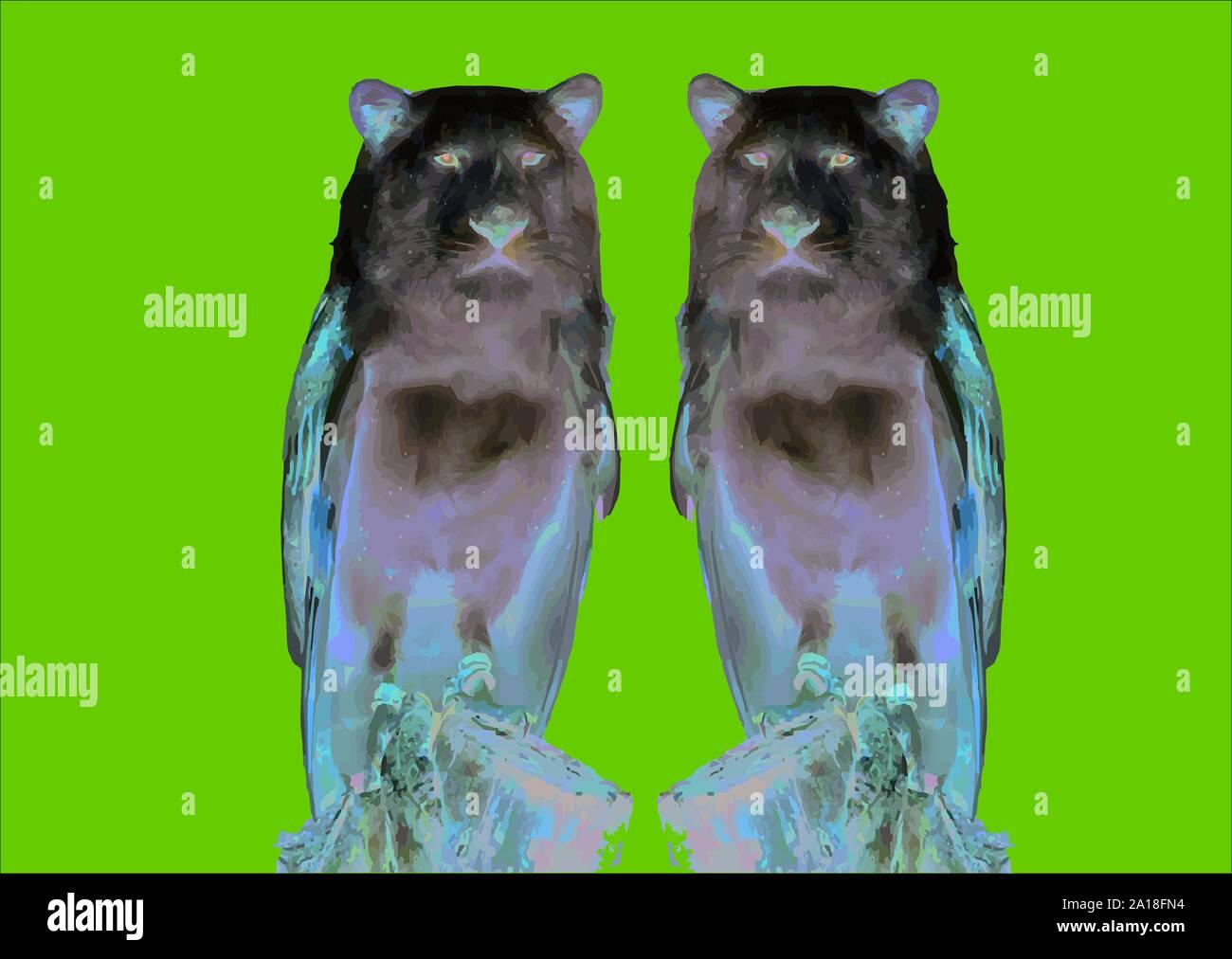 hibou-avec-tete-de-chien-des-animaux-etranges-2a18fn4.jpg