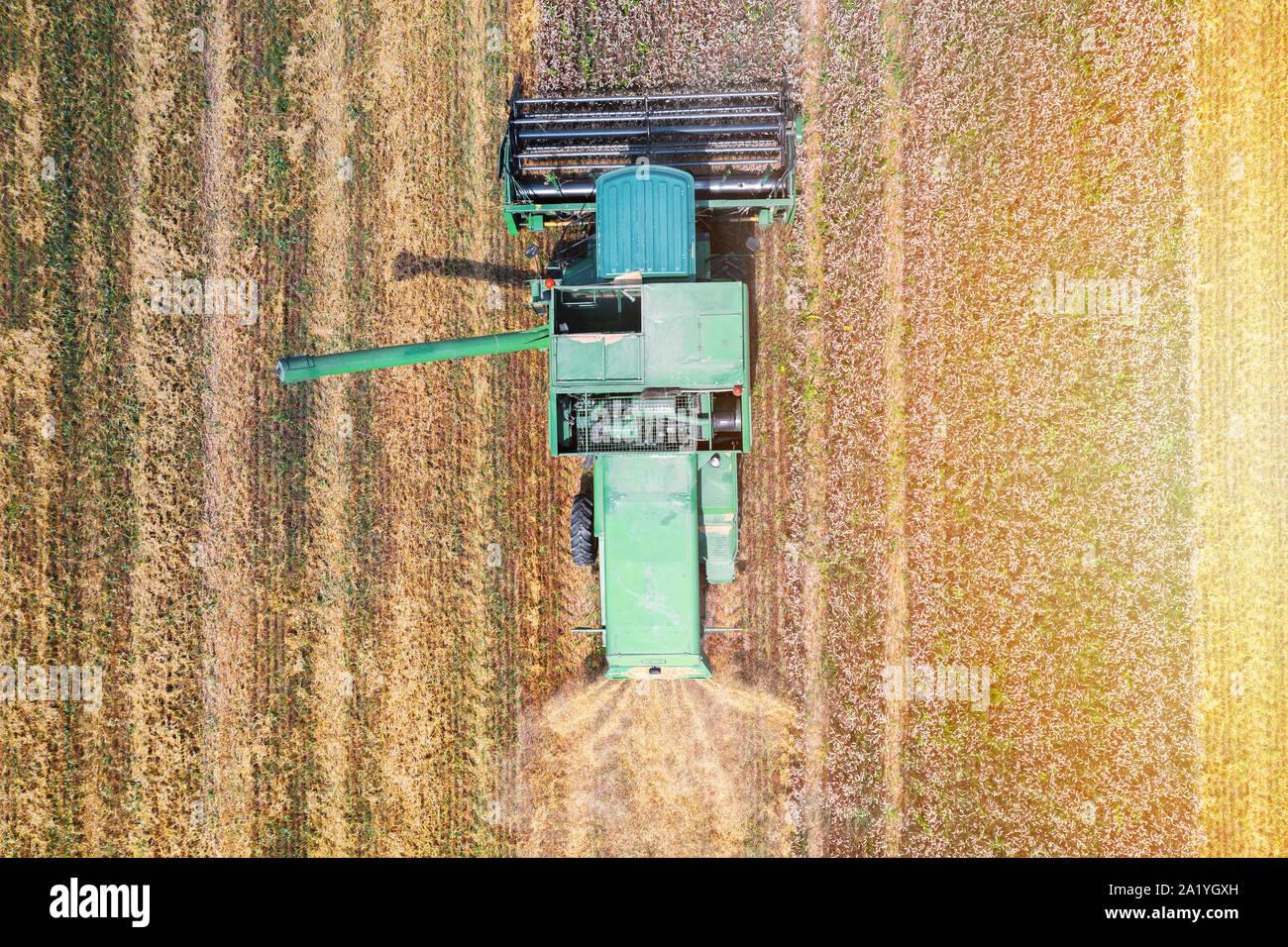 La récolteuse sur le champ de blé de la vue supérieure Banque D'Images