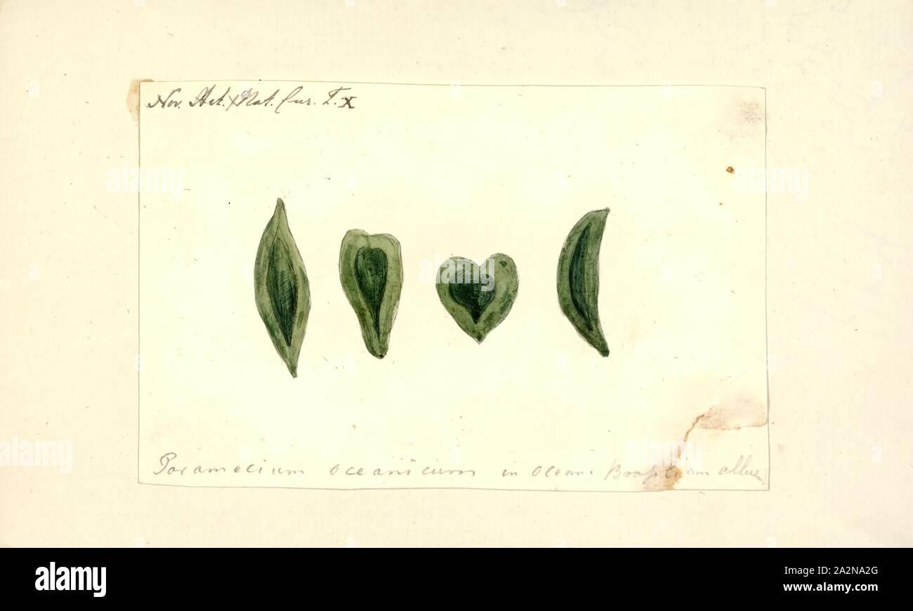 Paramécie Paramécie oceanicum, Imprimer, (également Paramoecium) est un genre d'eucaryotes unicellulaires ciliés, couramment étudiées en tant que représentant de la groupe ciliés. Paramecia sont répandus dans les eaux douces, saumâtres et marines, sains et sont souvent très abondants dans les bassins et les étangs stagnants. Parce que certaines espèces sont cultivées et facilement facilement induits à conjuguer et à diviser, il a été largement utilisé dans les salles de classe et des laboratoires pour l'étude des processus biologiques. Son utilité comme organisme modèle a causé un chercheur ciliés de la caractériser comme la 'white' du Phylum ciliophora Banque D'Images