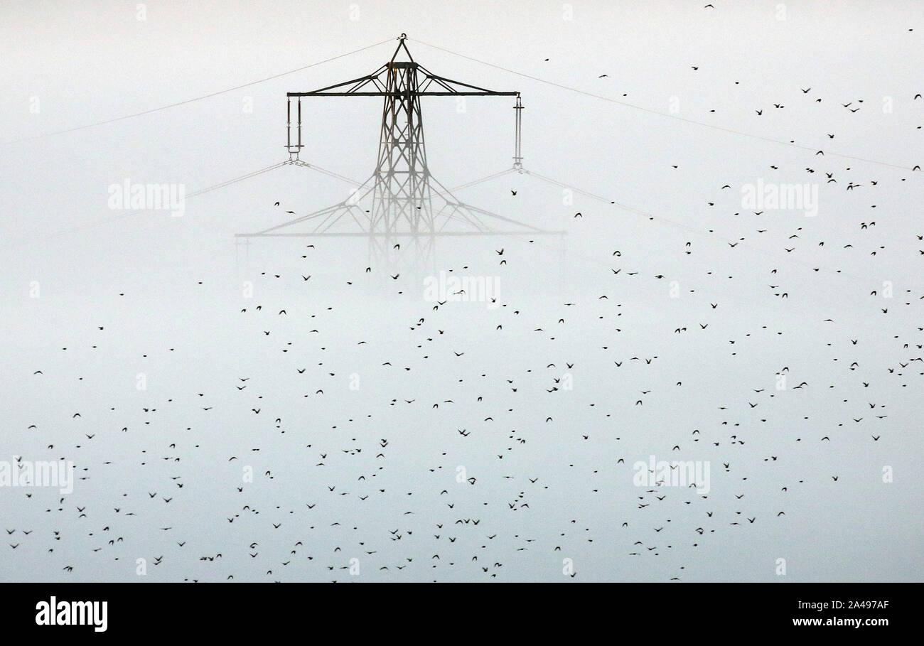 Riedlingen Bechingen, Allemagne. 13 Oct, 2019. Un troupeau d'oiseaux mouches passé une colonne d'alimentation sortant de la brume matinale. Crédit: Thomas Warnack/dpa/Alamy Live News Banque D'Images