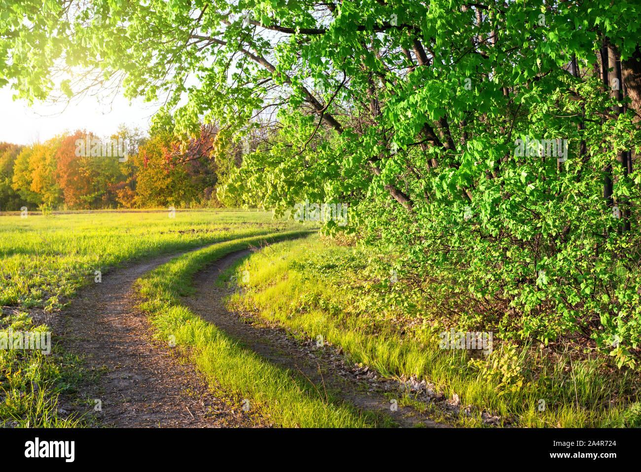 Route de campagne et un parc d'été. Les arbres et l'herbe verte. Soleil clair Banque D'Images