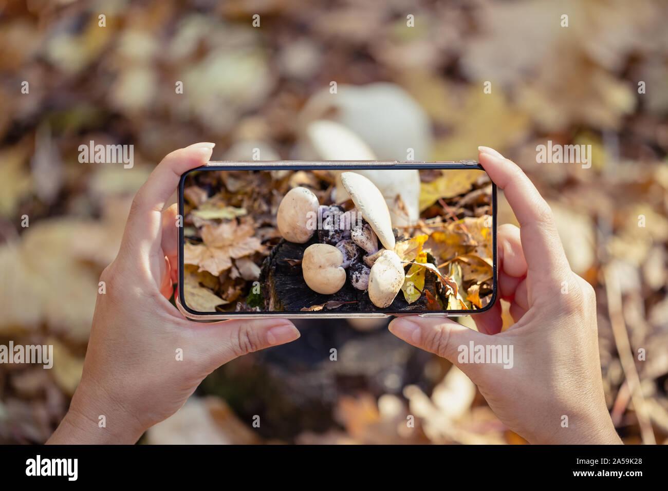Femmes avec un téléphone de prendre des photos de champignons dans la forêt. Le concept de l'automne et vie active. Banque D'Images