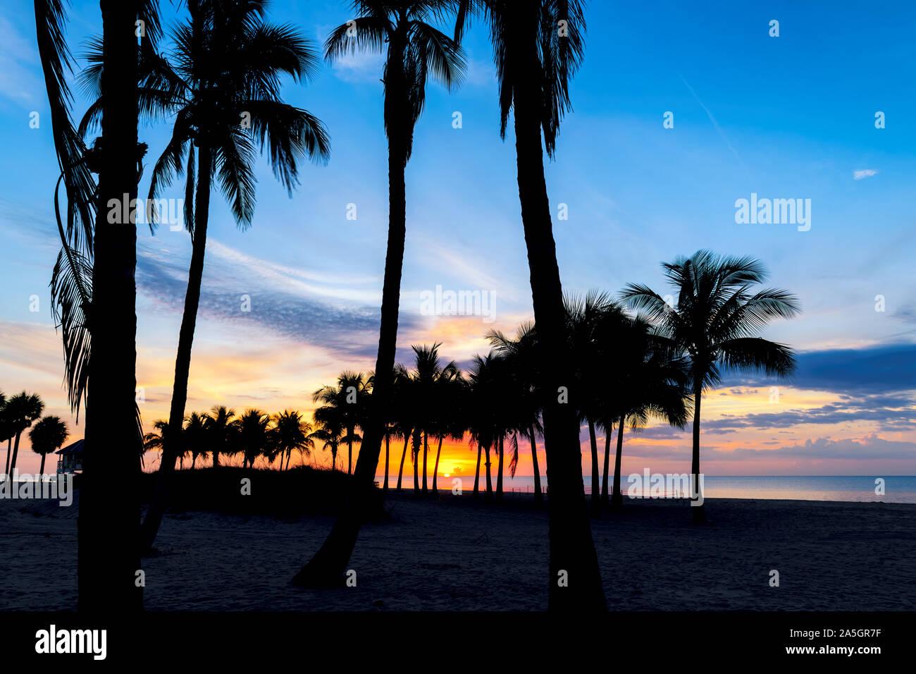 Palmiers sur Miami Beach au lever du soleil Banque D'Images