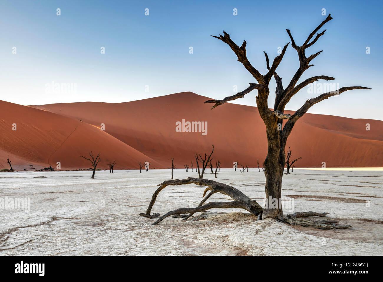 Vieux arbres morts avec Big Daddy derrière la dune, Deadvlei, Namib-Naukluft National Park, Sesriem, Namibie Banque D'Images