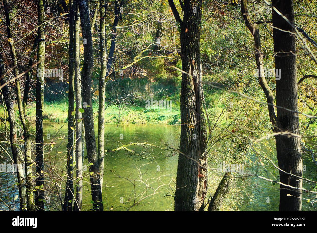 La Haute-bavière, parc national Isarauen - vue de la rivière Isar, à travers les arbres sur les berges en automne Banque D'Images