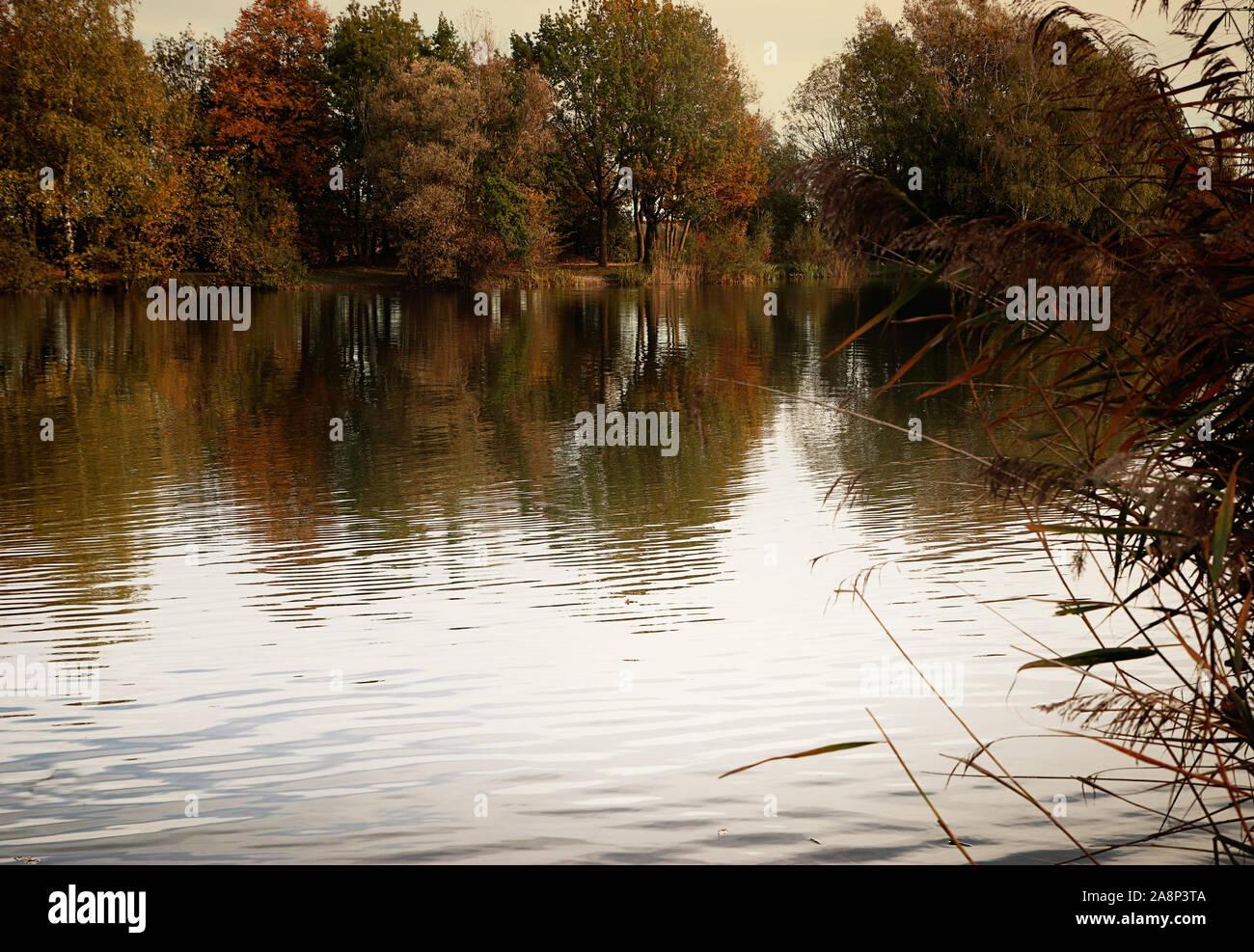 Badeweiher petit lac près de Finsing, Haute-bavière en automne, calme et idyllique Banque D'Images
