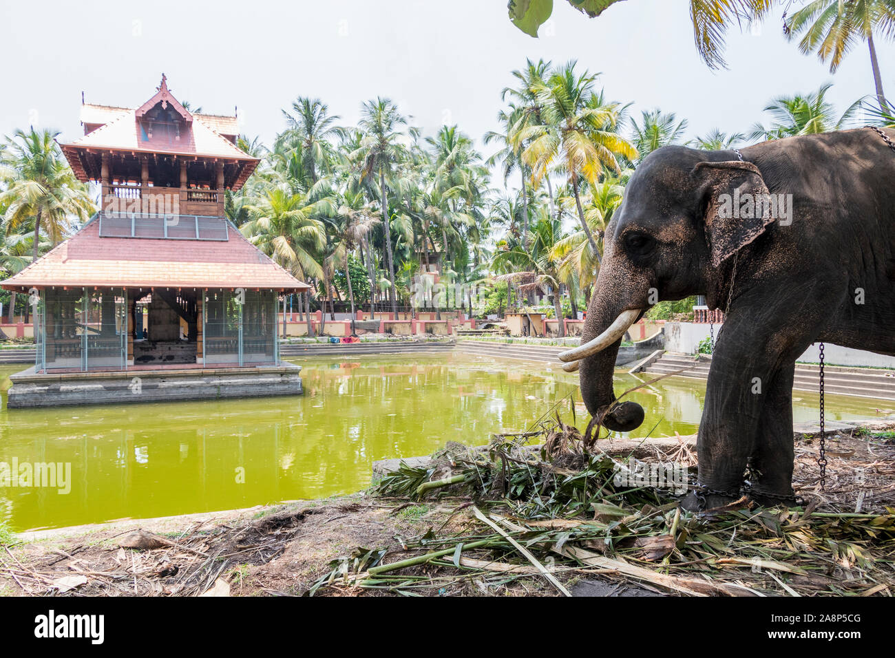 Elephant En Inde Signification siva temple photos & siva temple images - alamy