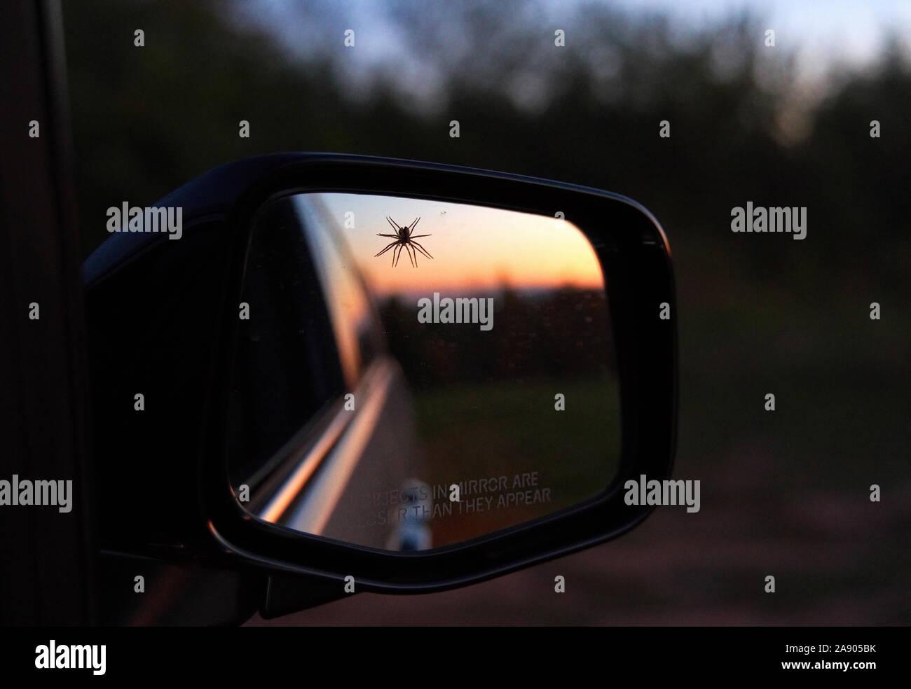 Spider hanging out perdu par un miroir côté voitures. Heureusement, l'alerte sur le miroir sur la manière dont les objets sont plus proches qu'ils semblent ne devraient pas prendre du poids. Banque D'Images