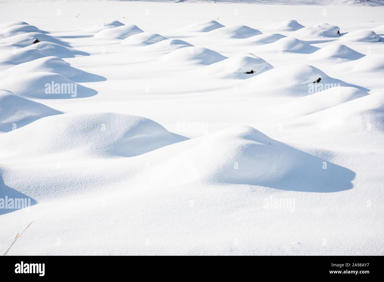 Dunes de neige pour les récoltes de Biei, Hokkaido, Japon pendant la saison d'hiver. Banque D'Images