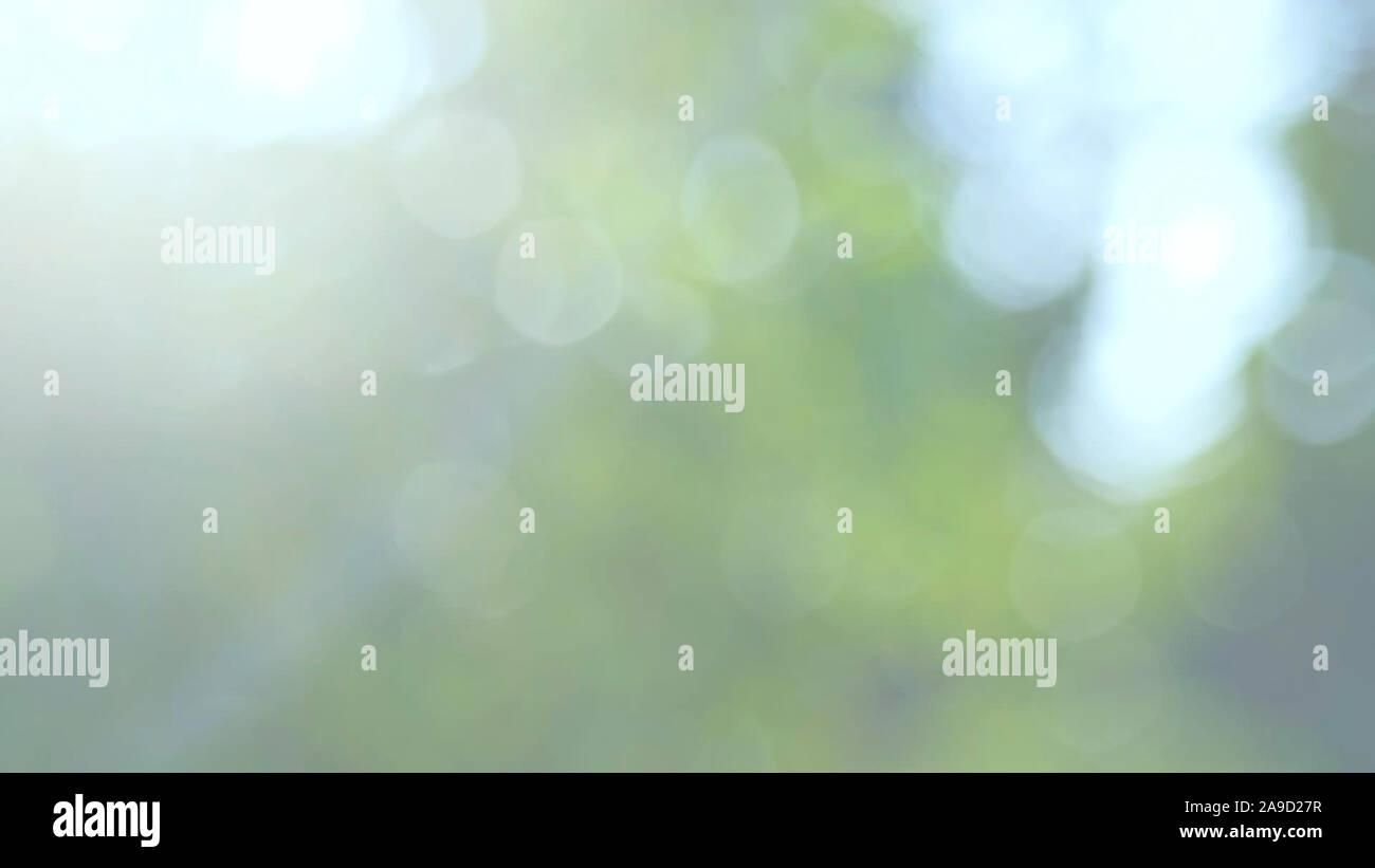 Caractère abstrait flou fond avec des feuilles vertes et des lumières naturelles, Flou d'arrière-plan flou floue de la feuille et arbres Banque D'Images