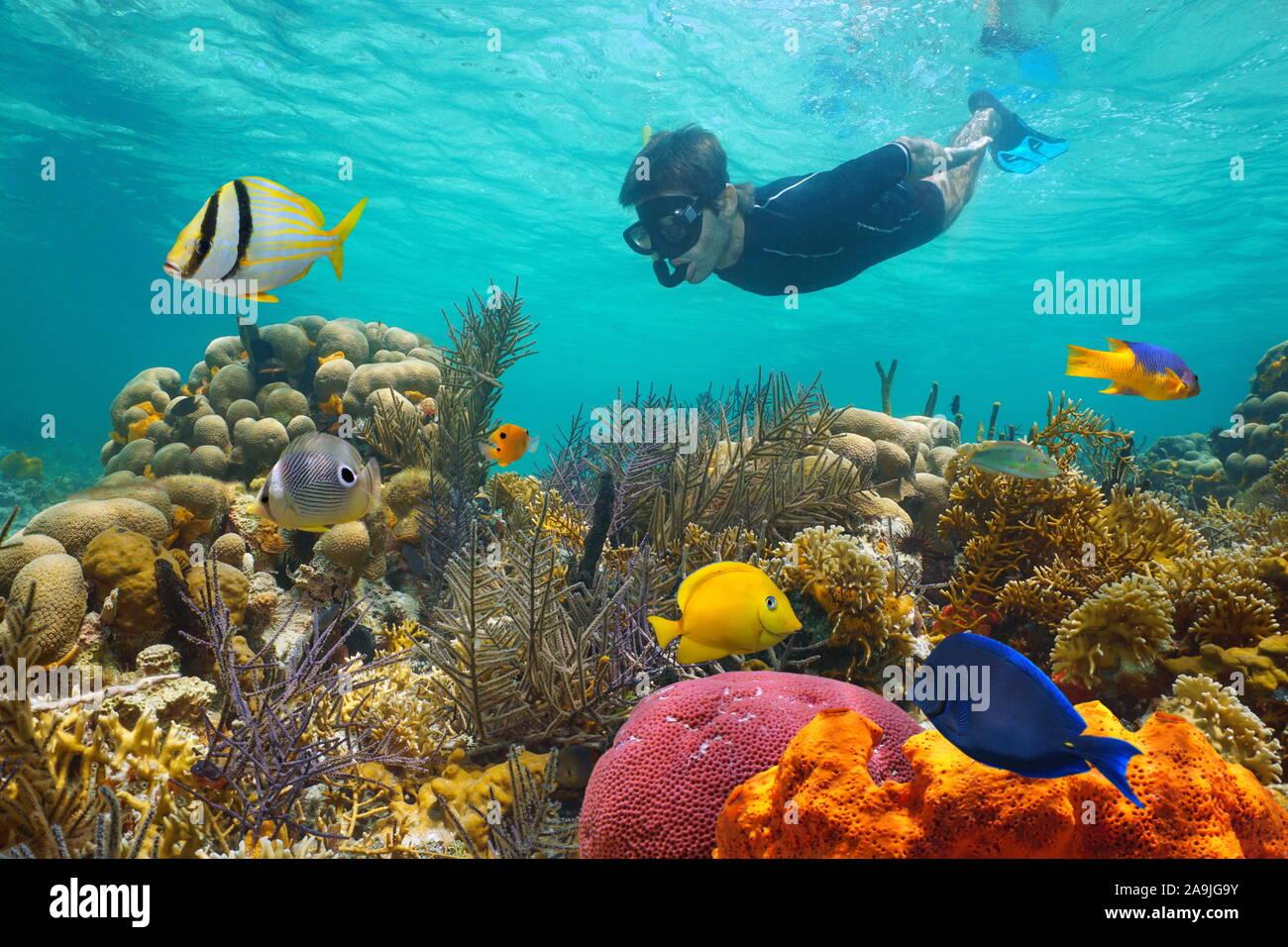 Mer des Caraïbes, les récifs coralliens colorés avec des poissons tropicaux et un homme sous-marine Plongée avec Tuba Banque D'Images