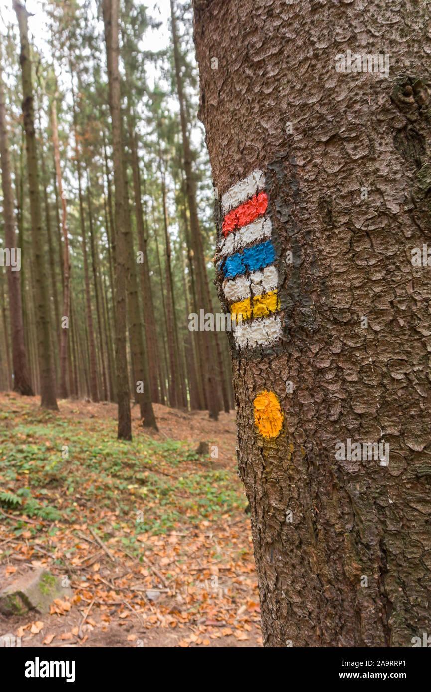 Route touristique des marques sur un arbre dans la forêt d'arbres en arrière-plan. Blanc, rouge, bleu et jaune. Banque D'Images