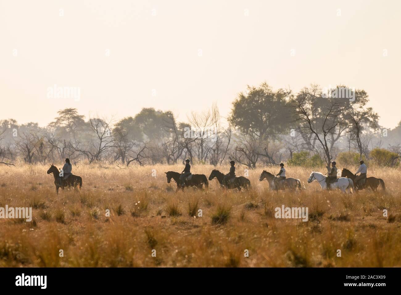 Safari à cheval à Macatoo, dans le Delta d'Okavango, au Botswana Banque D'Images