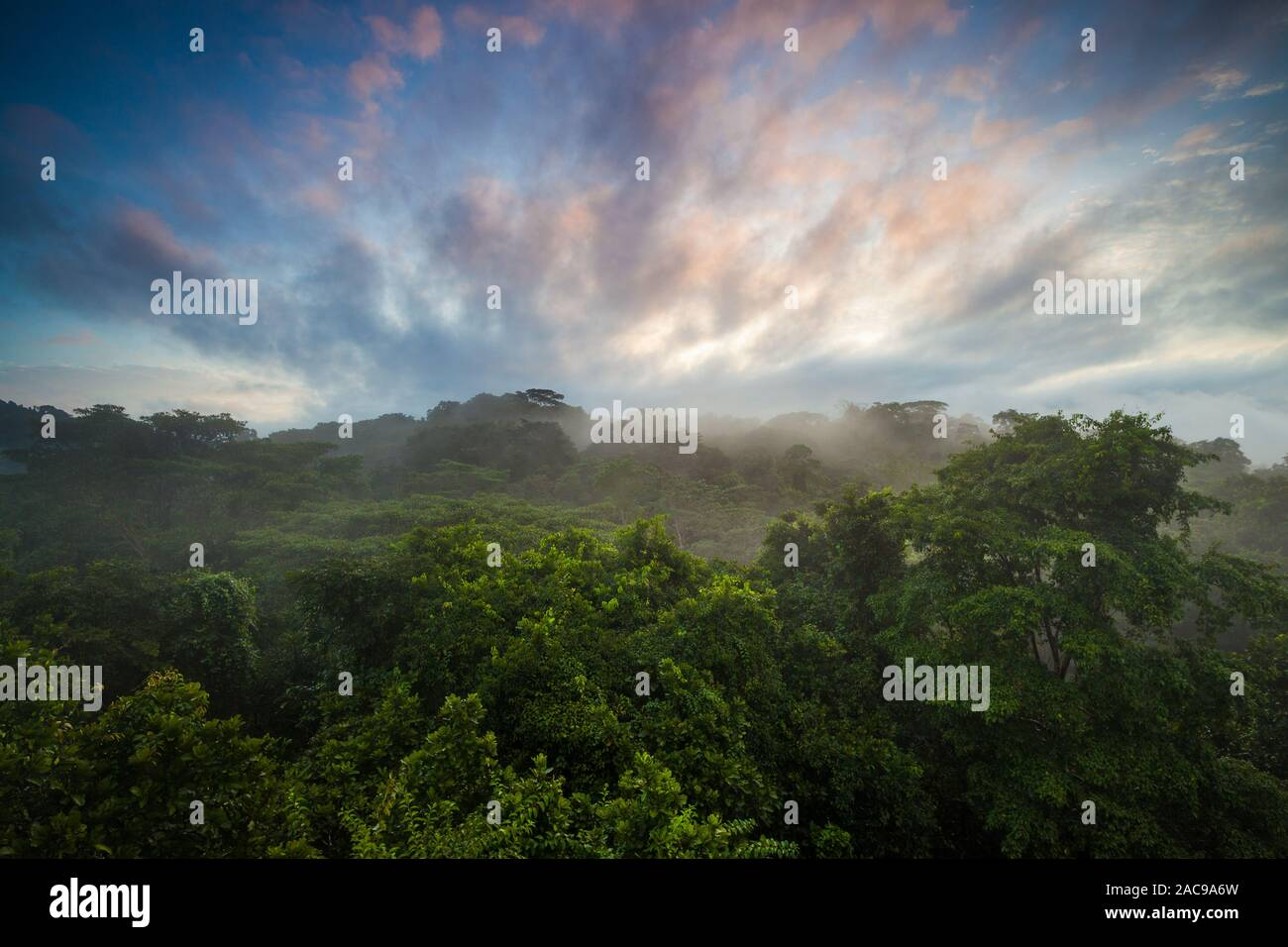 Misty rainforest au lever du soleil dans le parc national de Soberania, Colon province, République du Panama. Banque D'Images