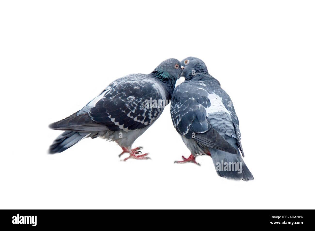 Embrassait PIGEONS sur balle-Jardin Décoration