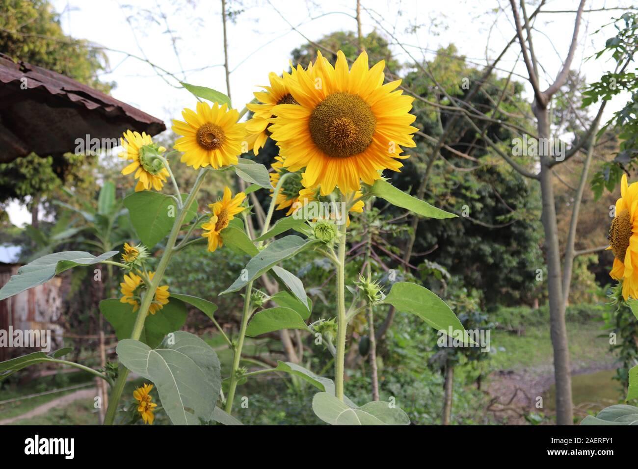 Fleurs jaunes photo Banque D'Images