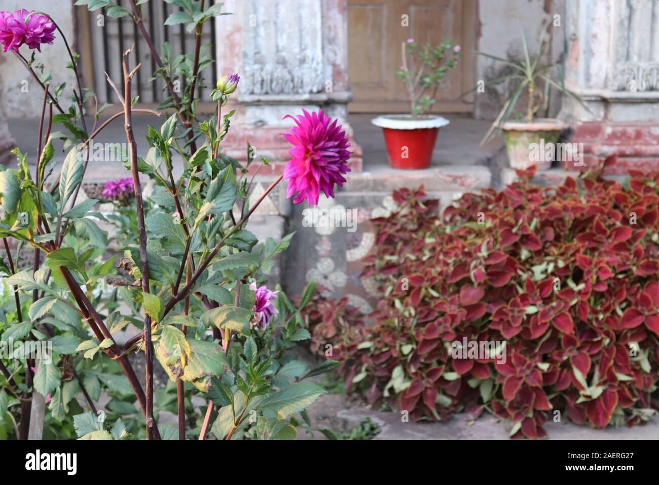 Fonds d'images de fleurs Banque D'Images