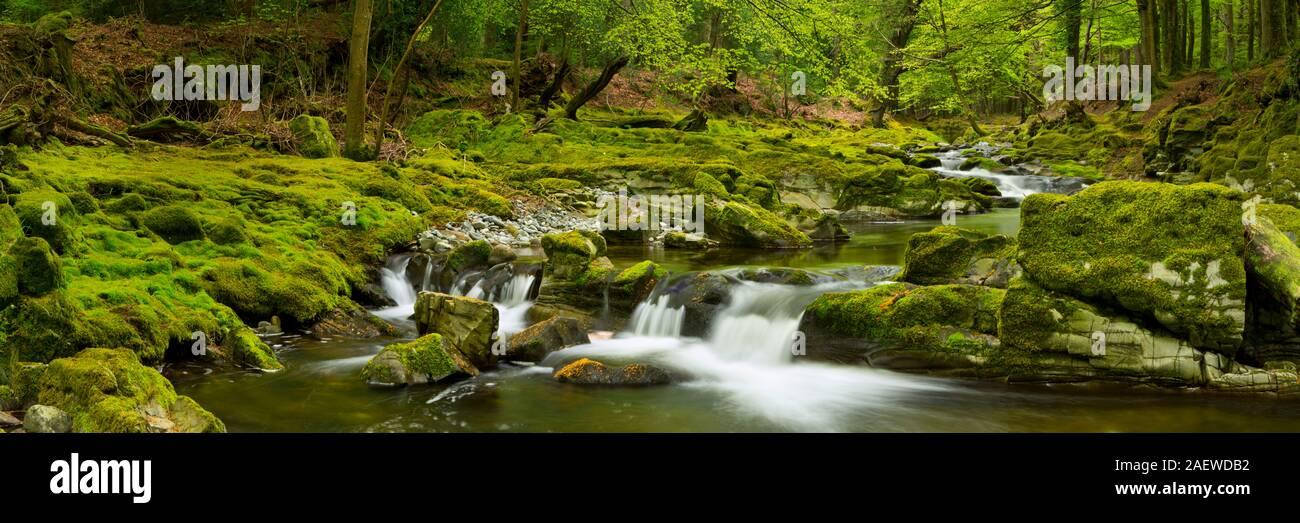 La rivière Shimna à Tollymore Forest Park en Irlande du Nord. Banque D'Images