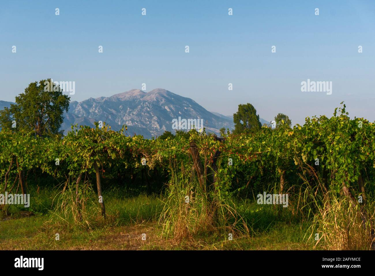 Les arbres à feuilles caduques et une montagne contre le ciel en Grèce l'horizontale Banque D'Images