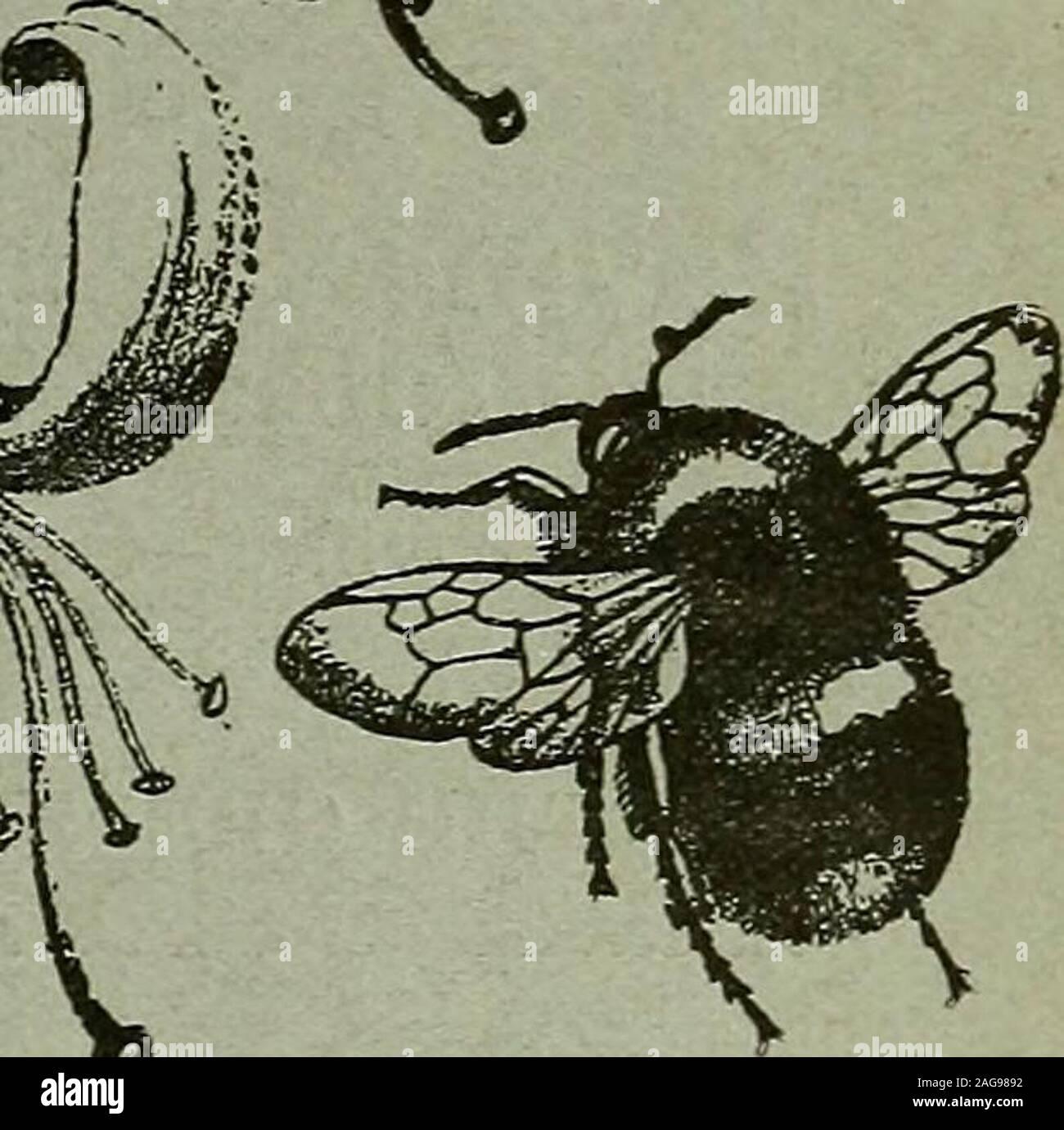 . L'entomologiste du dossier et du journal officiel de variation. Les Entomologistes ET ENREGISTREMENT DE VARIATION JOURNAL édité par J. W. TUTT, F.E.S. Aidé par BEAEE HUDSON T., b.sc, f.e.s., f.e.s.e.M. BUER, B.A., F.Z.S., r.i.s., f.e.s. T. A. CHAPMAN, m.d., f.z.s., f.e.s.JAS. E. COLLIN, F.E.S. H. St J.K.DONISTHORPE f.z.s. f.e.s. Loth, février 1906. Price SIXPENCE (net). (Avec la plaque.) Abonnement pour compléter le volume, publiez gratuitement (y compris tous les numéros doubles, etc.)sept shillings, POUR ÊTRE TRANSMIS À J. HERBERT TUTT, 119, Westcombe Hill, Blackheath, LondoNj S.E. Banque D'Images