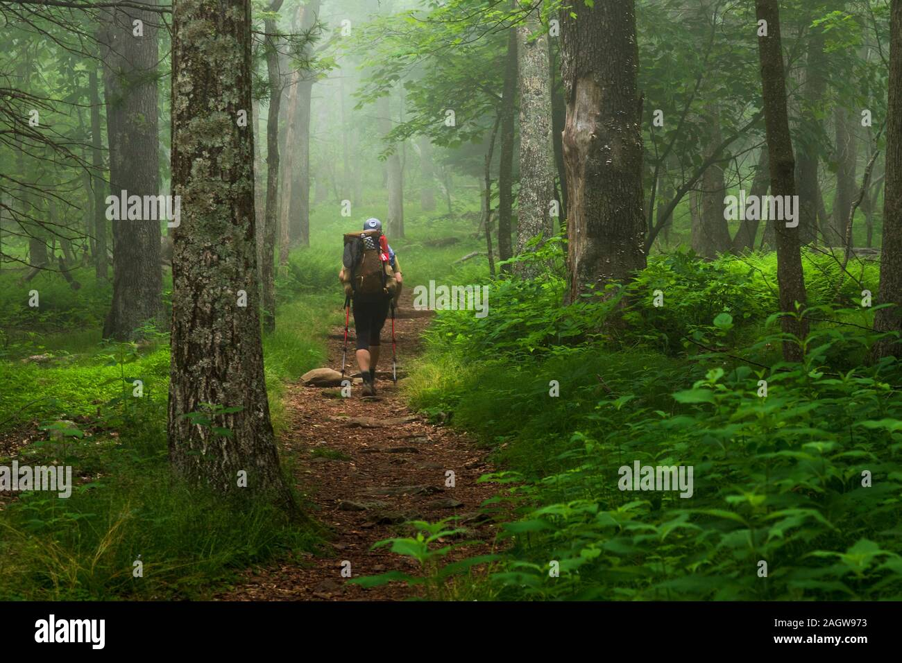 Un seul homme les circuits de randonnée le sentier des Appalaches à travers une forêt luxuriante dans Shenandoah National Park, Virginia Banque D'Images
