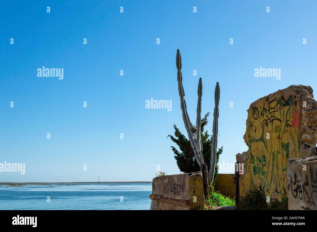 Cactus dans la plage à proximité de ruines du mur industiral, Faro, Portugal Banque D'Images