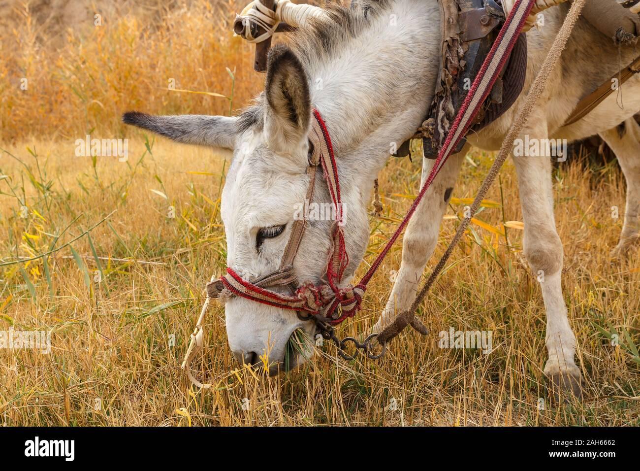 Tete D Ane Banque D Image Et Photos Alamy
