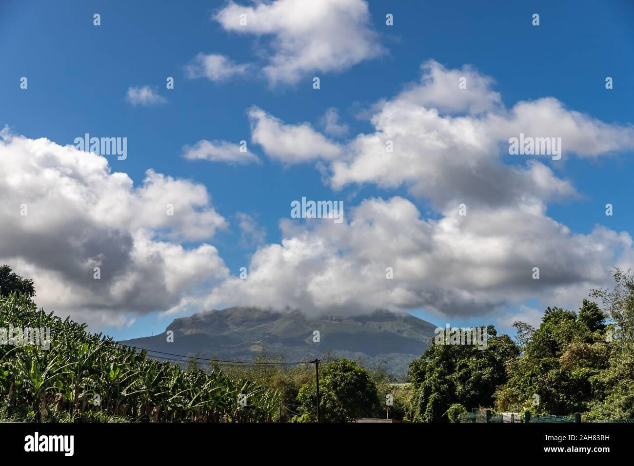 Plantation de banane avec arrière-plan vue du volcan en Martinique, France Banque D'Images