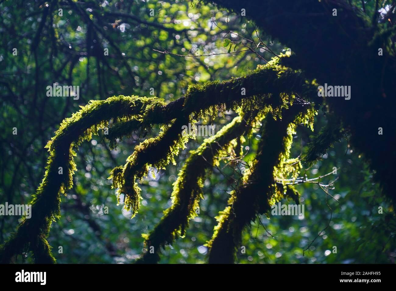 Une forêt dense sur l'île grecque de Céphalonie, Mer Ionienne, Grèce Banque D'Images